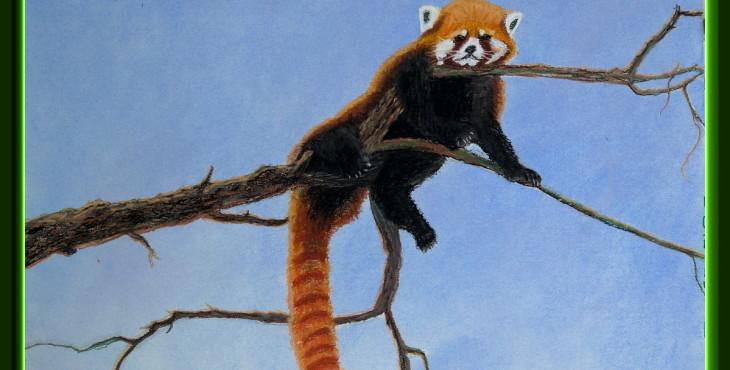 Red Panda on tree. Lorberboim Soft Pastel Painting.