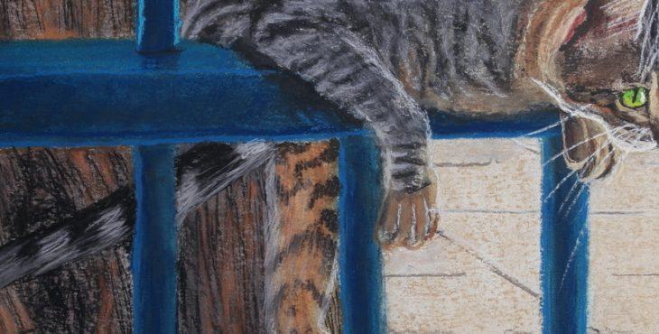 Cat on Barred Fence  14 Dec 2018 .חתולה על גדר מסורגת