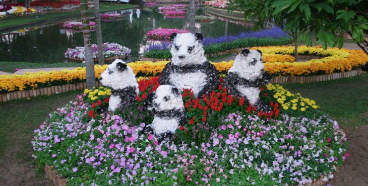 Chiang Mai Flower Festival    2019    פסטיבל הפרחים ציאנג מאי